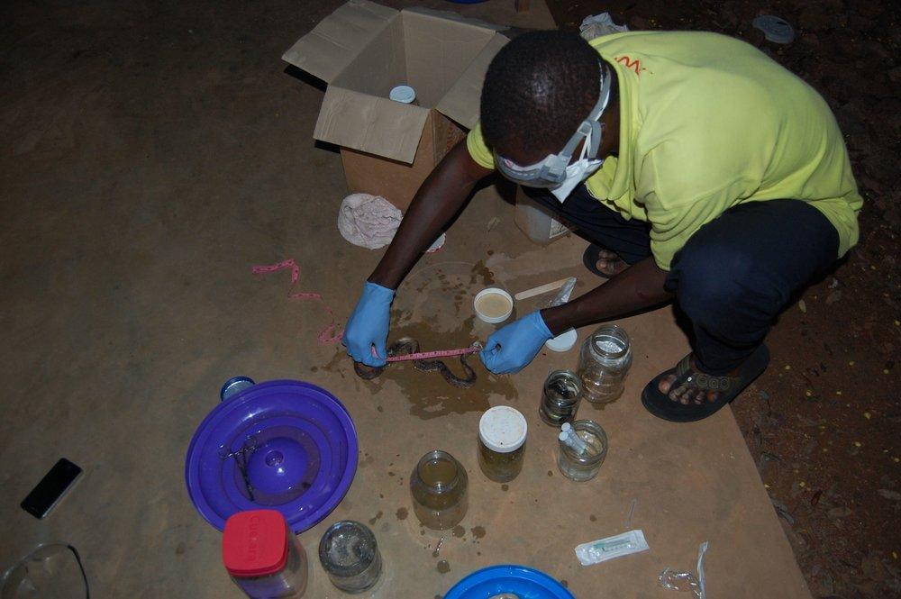 Relevant Benin Photos - 1105.jpg