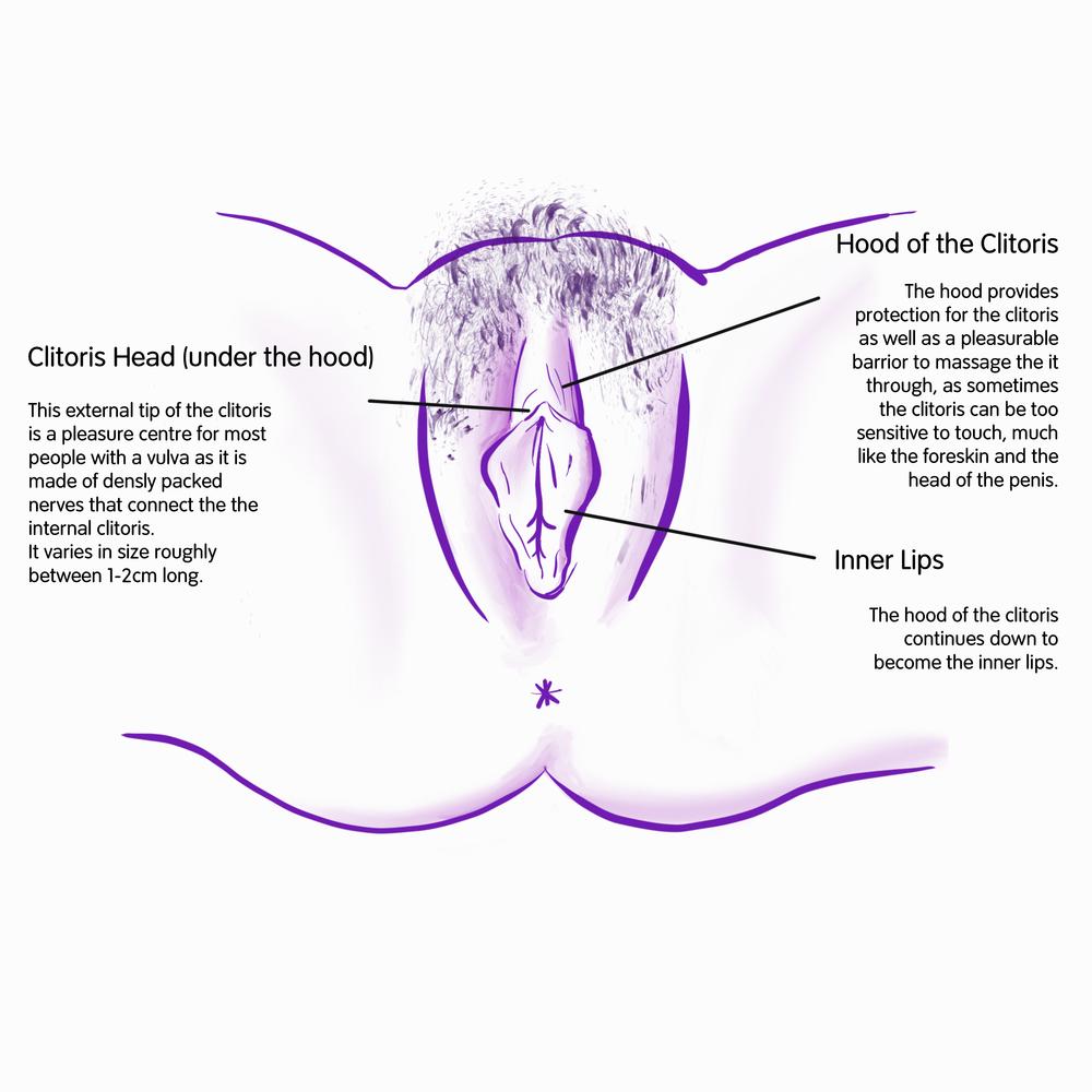 WEB Vulva B inner .png
