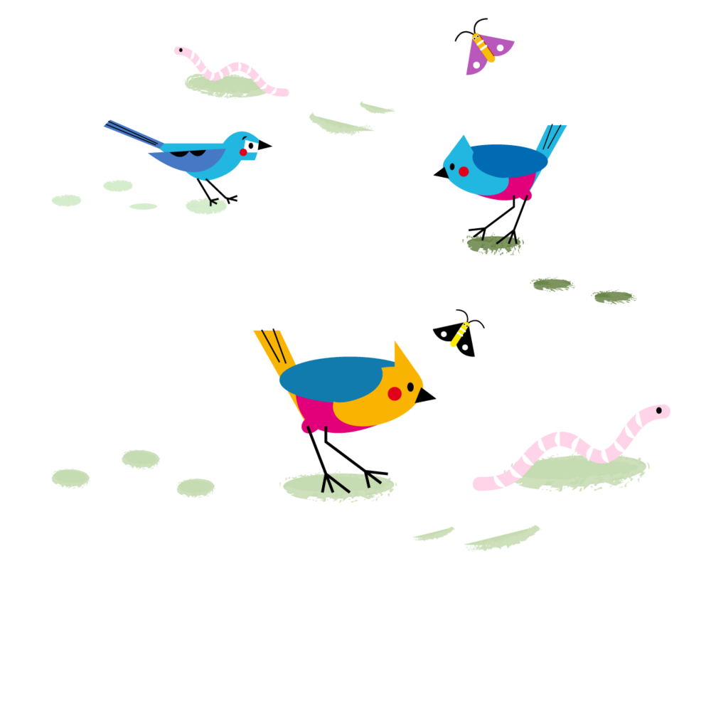 Birds - Vector Illustration © Emeline Barrea, All rights reserved