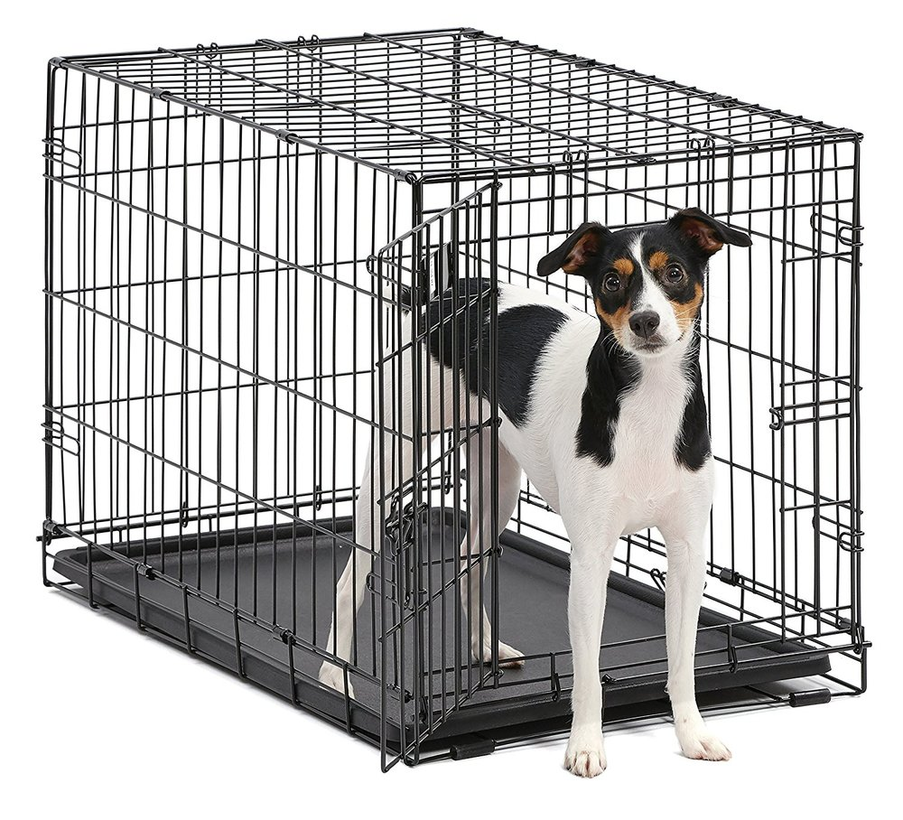 Small Dog Crate - For Petite Mini GoldendoodlesSingle door folding metal dog crate, iCrate measures 36L x 23W x 25H inches & is suitable for intermediate dog breedsDog crate includes a FREE divider panel, durable dog tray, carrying handle,