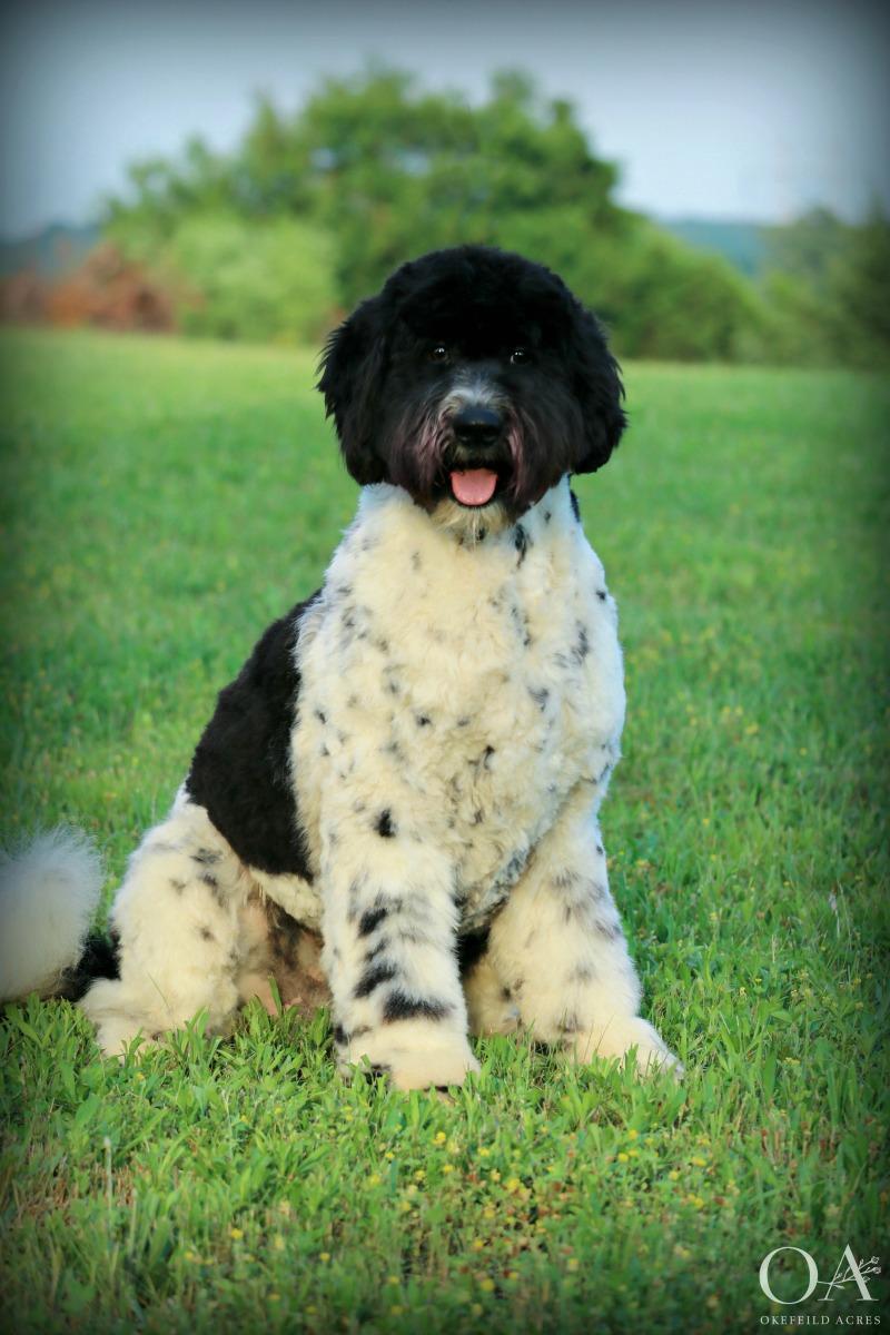 Meet Oreo! -