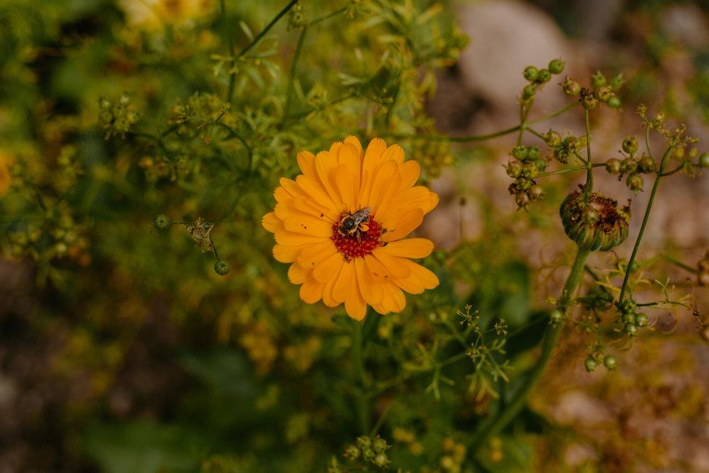 2019 Programs - Herbalism and Gardening Learning Series