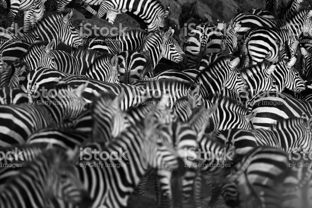 stand out in the crowd -