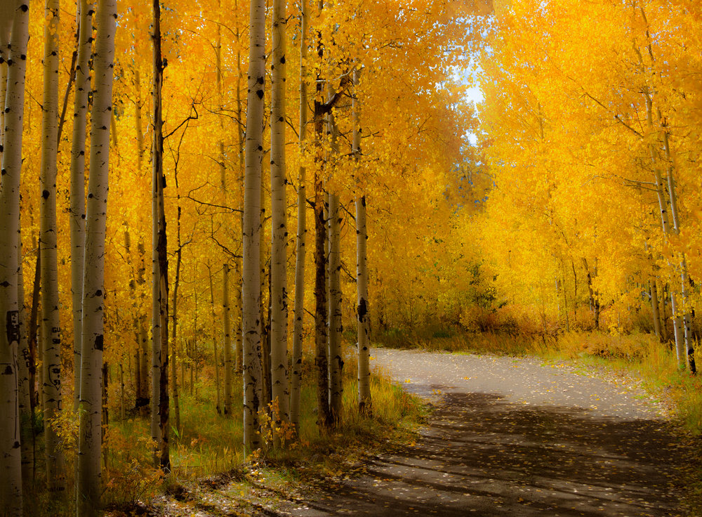 Into The Aspens 2  - LR.jpg