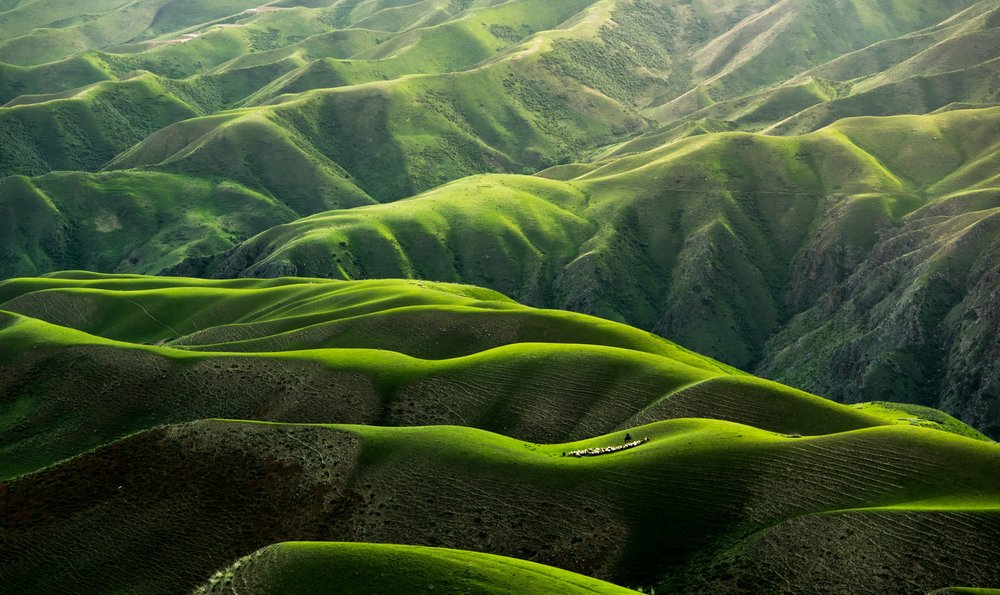 green nature.jpg