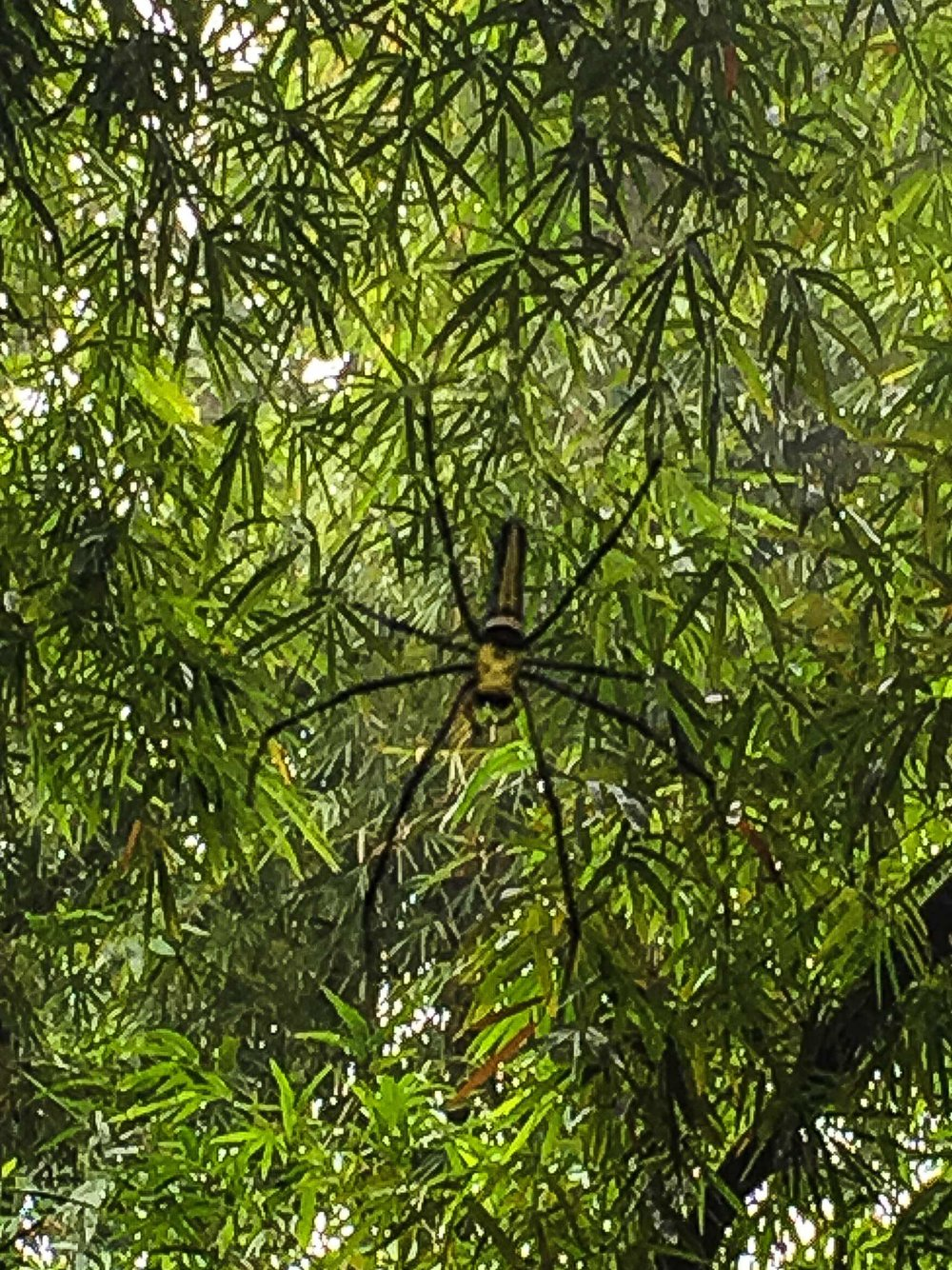 Orb Spider Bangladesh