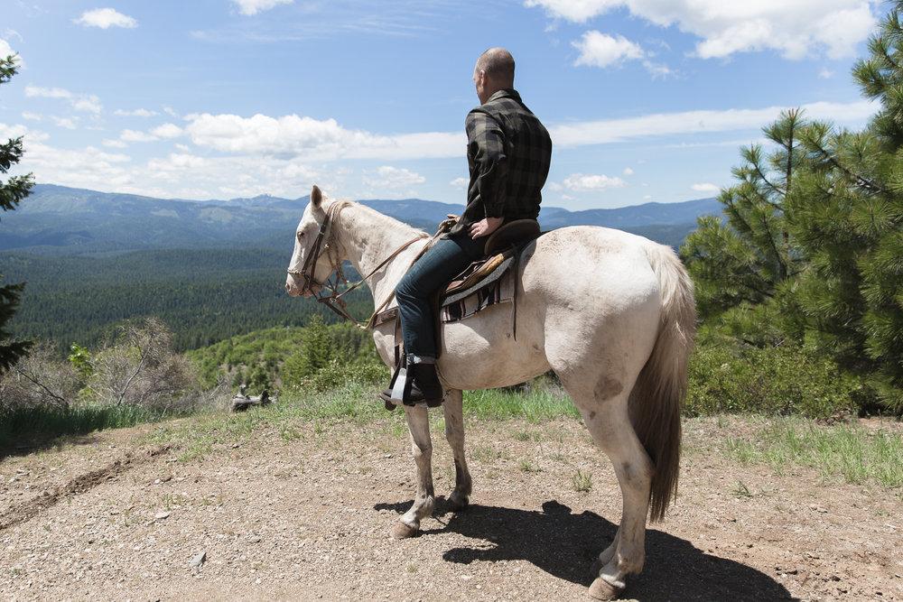 horses-36.jpg
