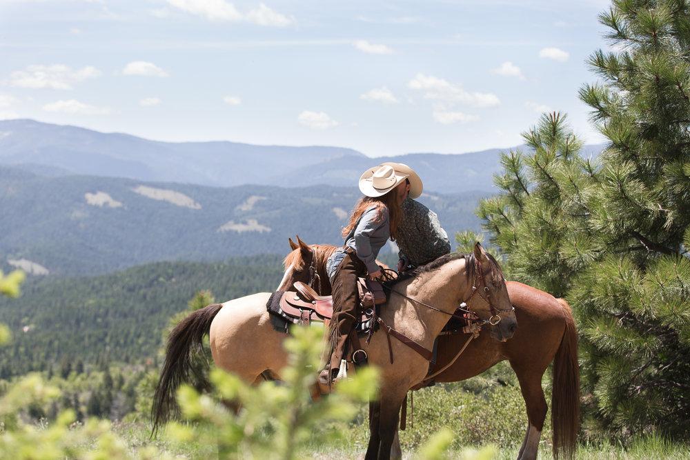 horses-46.jpg
