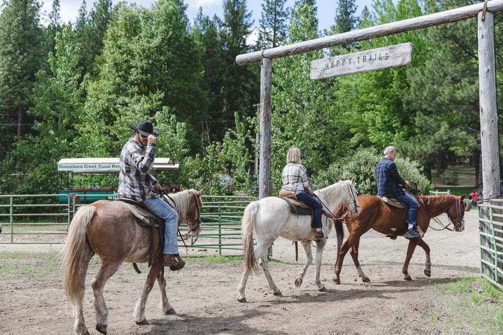 horses-47.jpg