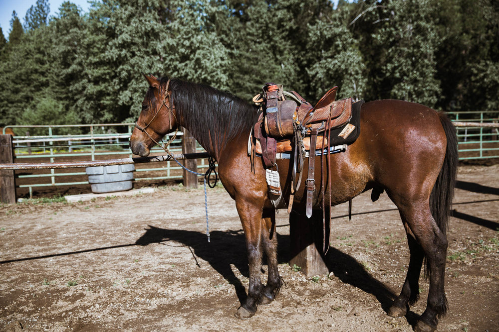 Tips for Beginner Riders for guests of Greenhorn Ranch, Quincy, California