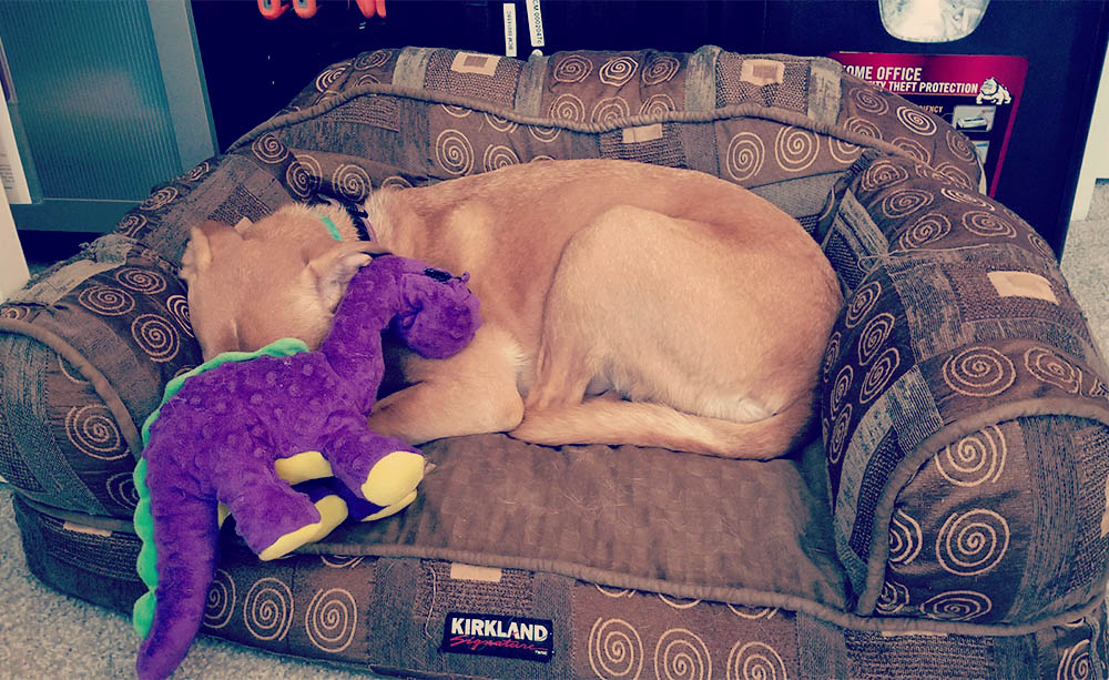 Consulting with her favorite purple dinosaur.