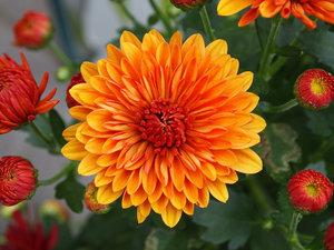 120 Botanical Baby Names House Plant Hobbyist