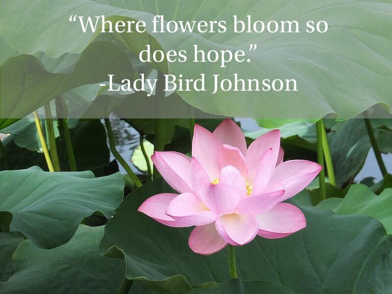 Lady Bird Johnson quote.jpg