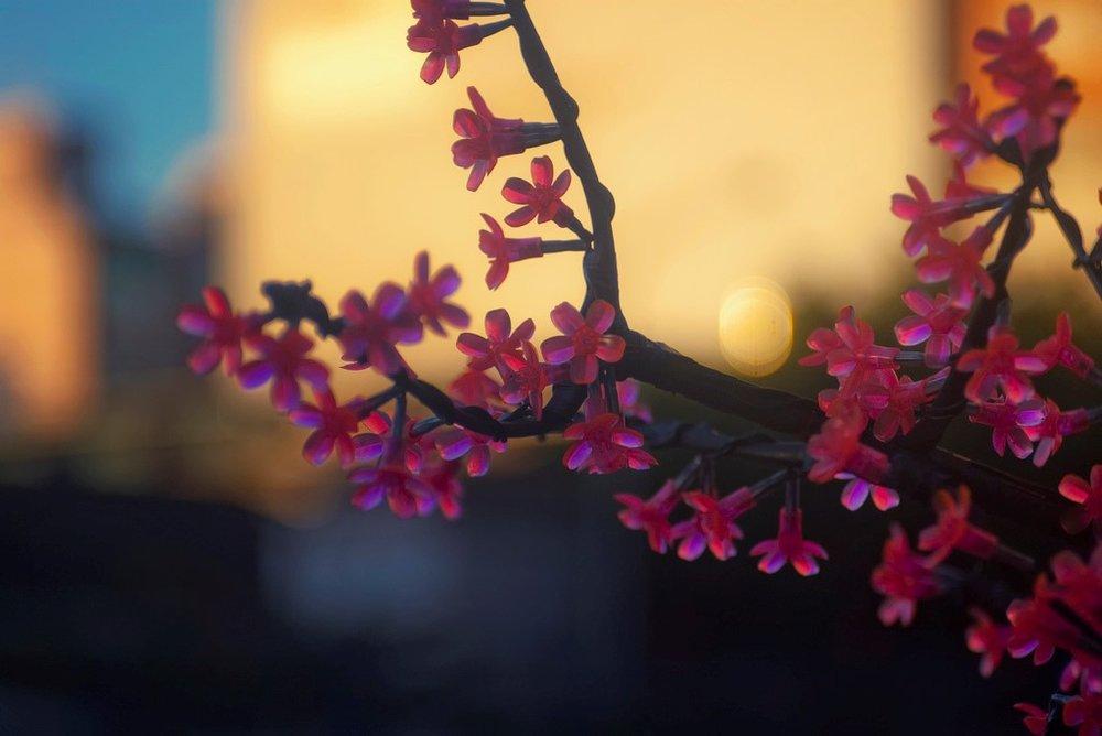 plastic cherry blossoms.jpg