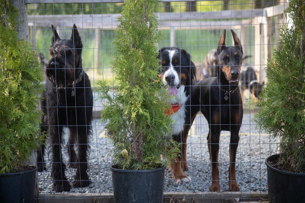 HubertKang-DogsOnaMission-00007.jpg