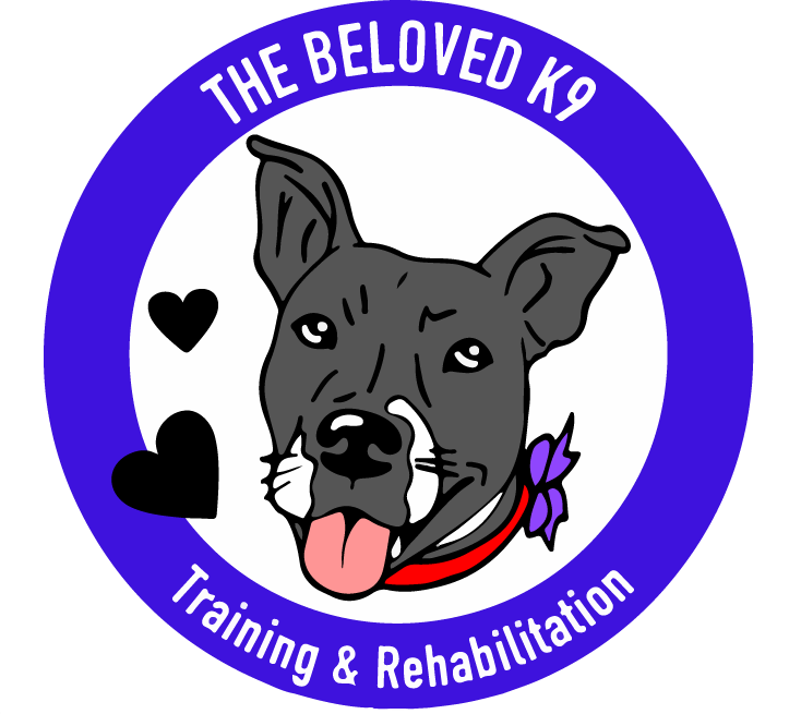 Phoenix Dog Training - Board and Train - Best Dog Trainer in Phoenix - The Beloved K9