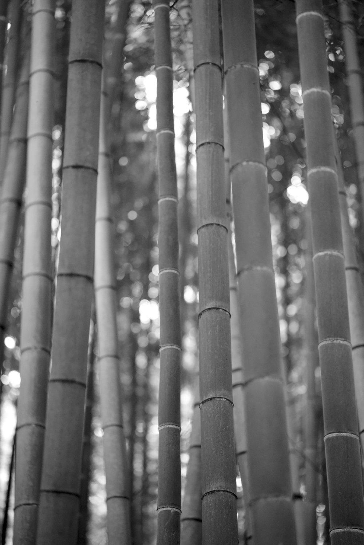 Japan_bamboo_copyright-melisdainon.jpg