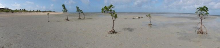 Mangrove Image 3.jpeg