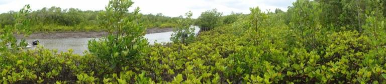 Mangrove Image 4.jpeg