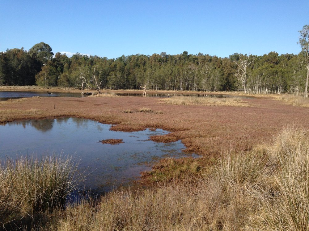 Saltmarsh Brunswick Estuary - courtesy of Kylie Russell