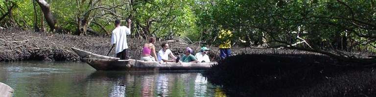 Boat Mangroves.jpeg