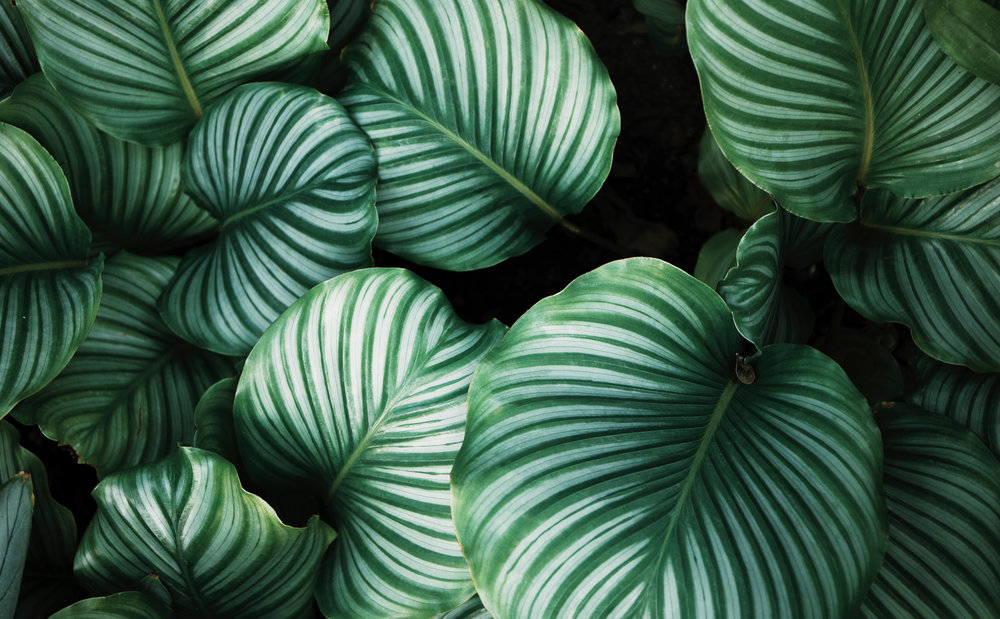 What is Biophilia? -