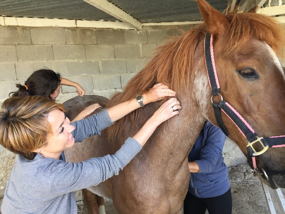 Mixed Animal Acupuncture students begin practicing acupuncture on both horses and dogs during the first on-site sessions.