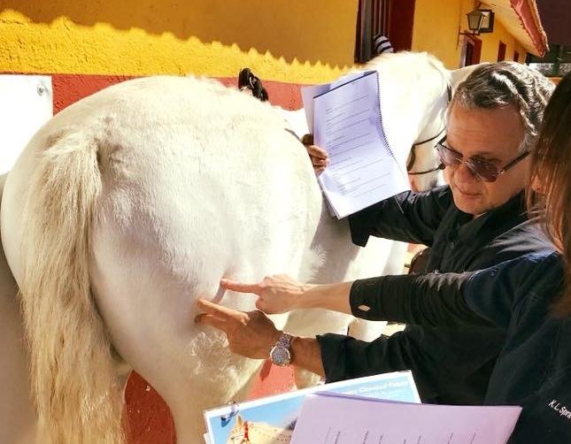 CERTIFICADO INTERNACIONAL METODO DEL BALANCE EN VETERINARIA - ONLINE- ONSITE CON EL MAESTRODR. ANTONIO ALFARO