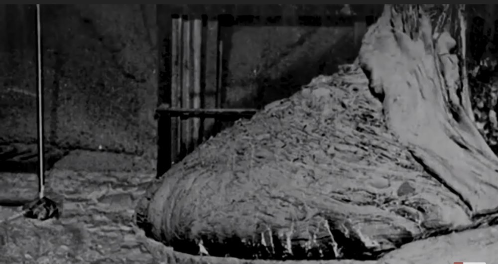 The Elephant Foot. Chernobyl.