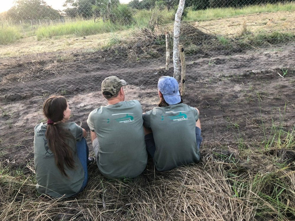 The Haldane family, Mark and his son Dustan and daughter Heather watch as the lions take their first steps on Mozambique soil.