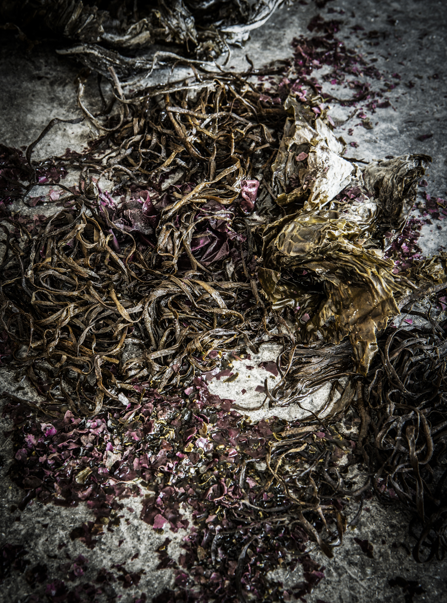 SEAWEED (9 of 12).jpg