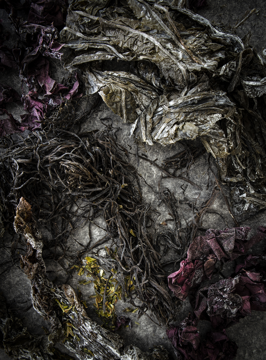 SEAWEED (7 of 12).jpg