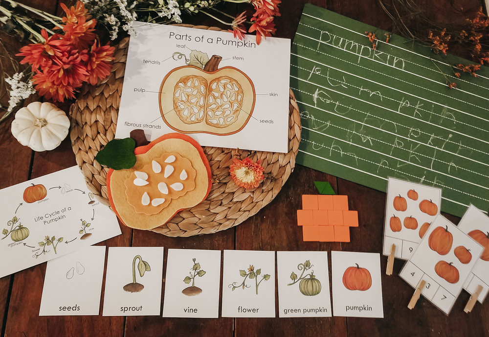 pumpkin invitation stephanie hathaway designs