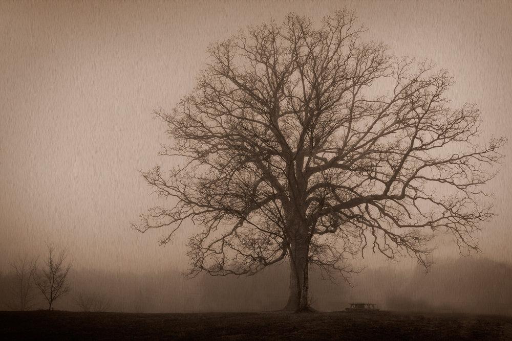 11-Favorite Tree.jpg