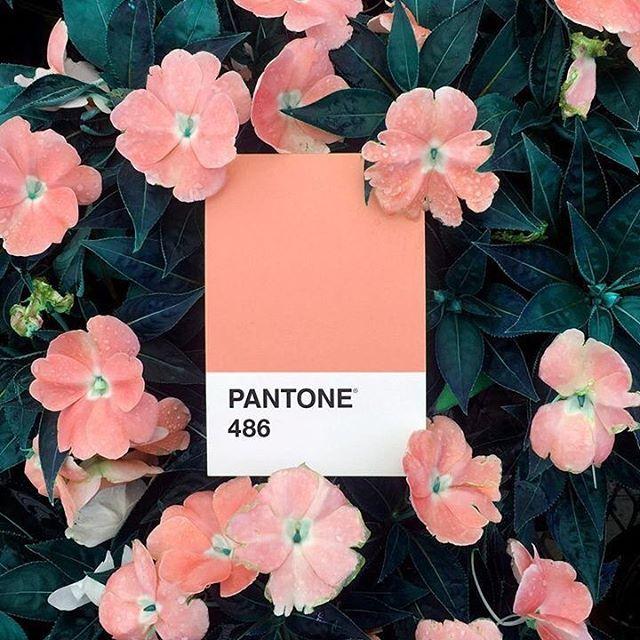 SPRINGING  #spring #inspiration #pantone #pink #inspo #mood #florals #floralsforspring #pantone2019