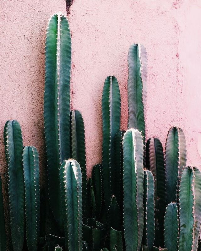 MONDAY: GO SIT ON A 🌵 #mondaymood #monday #inspo #cactus