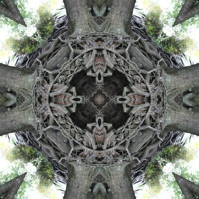 rp_treeroot8x8.jpg