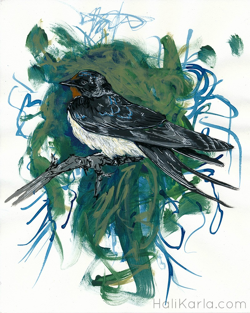 Barn swallow by Hali Karla
