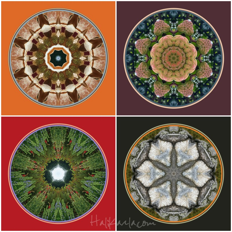 mandalas created from original photos by Hali Karla
