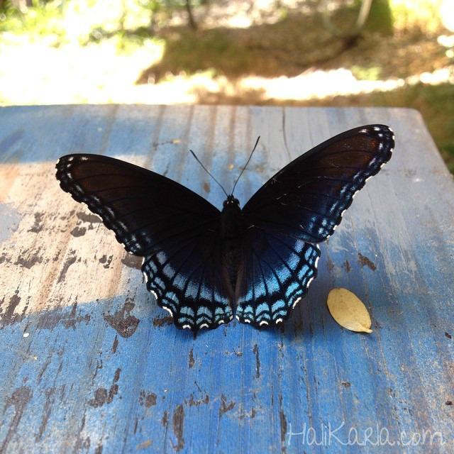 butterflyblue Hali Karla Arts