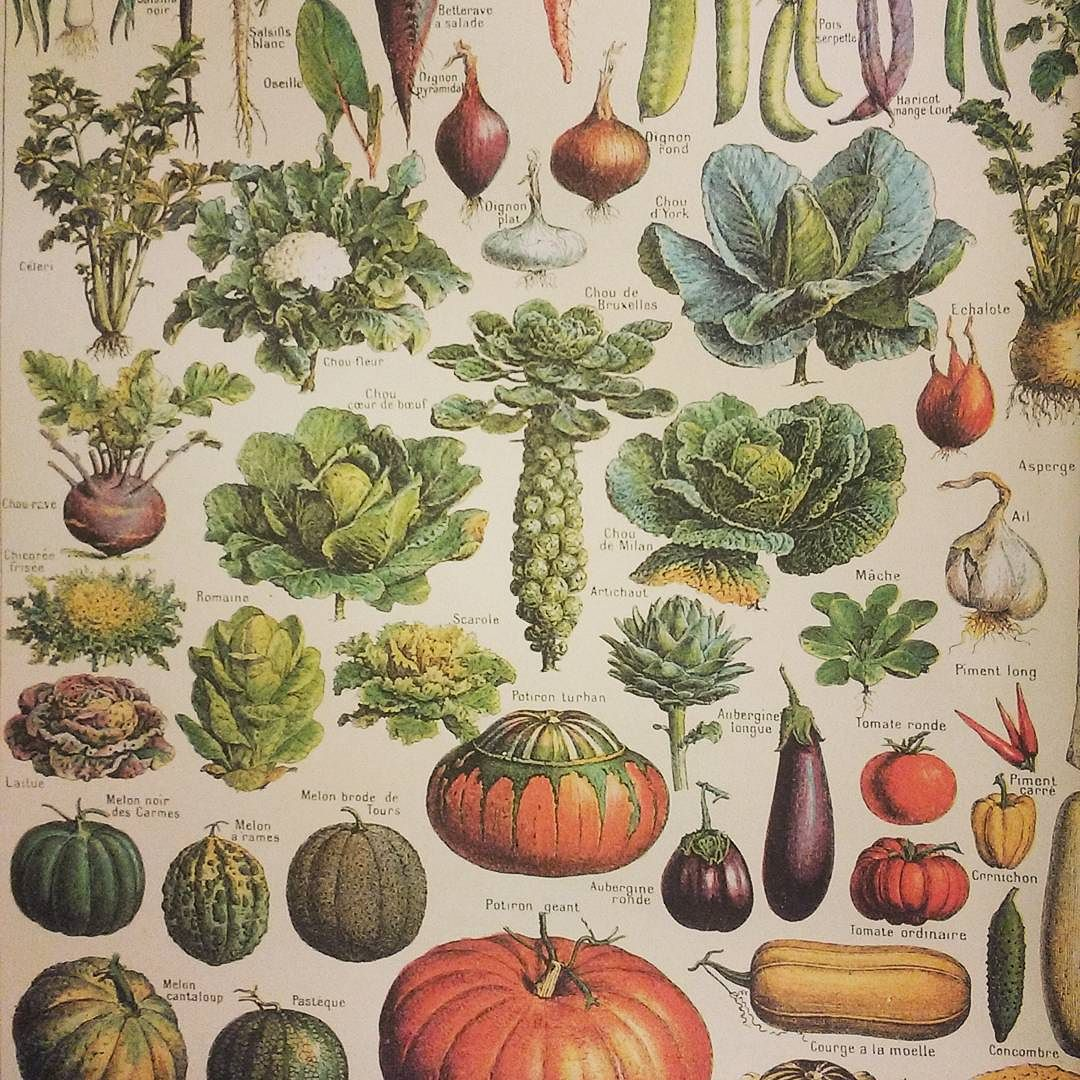 My mother has always had gorgeous posters of plant and food identification images in her home. Got this vintage style print for my kitchen today and it instantly became my favorite room again.