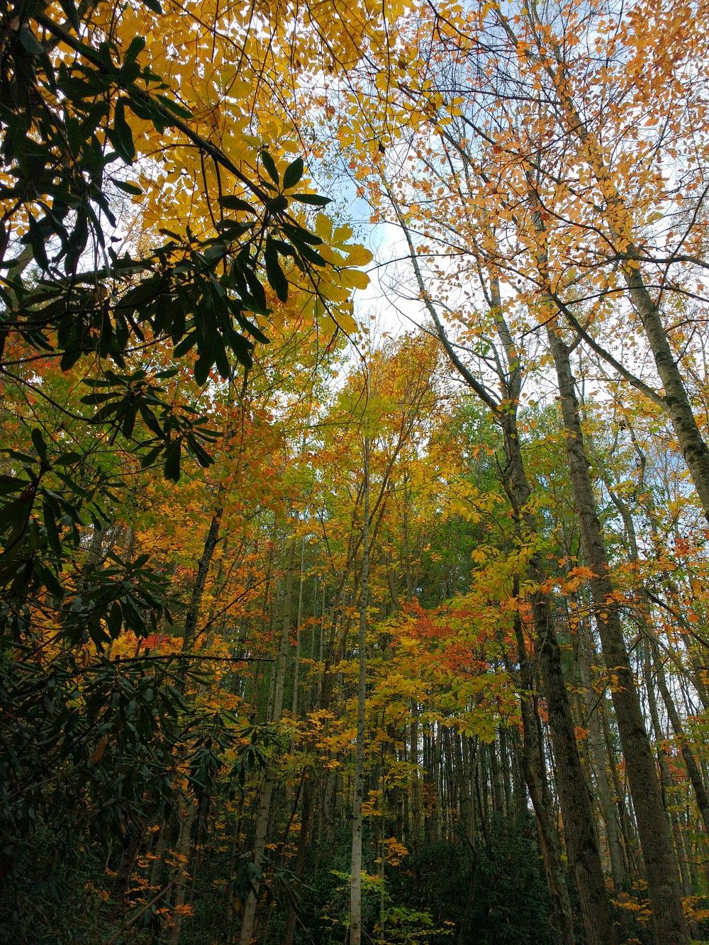WNC mountain trail, light and dark, Hali Karla Arts