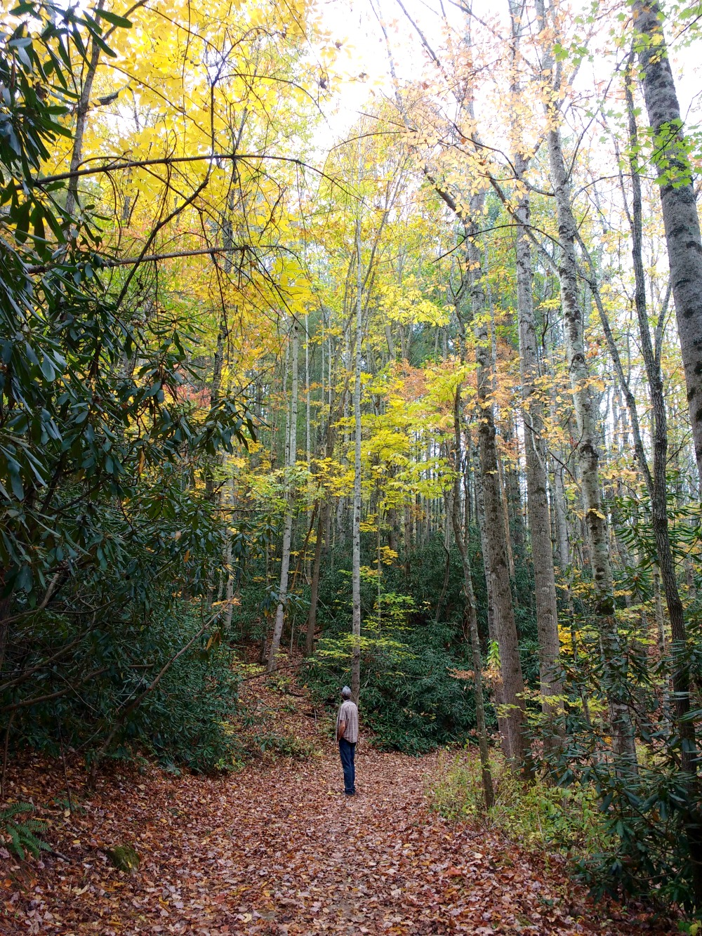 Western North Carolina Mountains in the Fall (Hali Karla Arts)