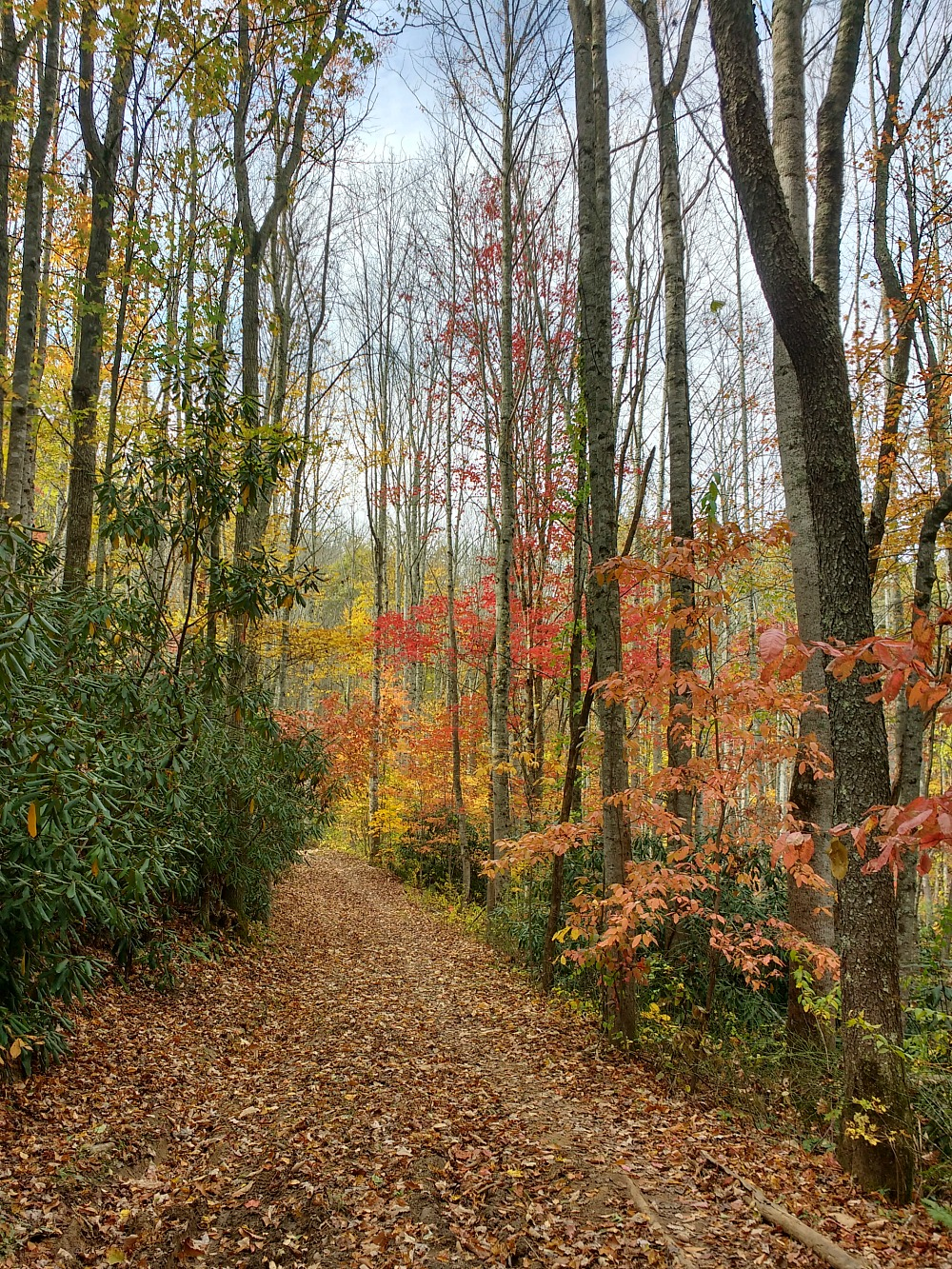 Path in the Western North Carolina Mountains (Hali Karla Arts)