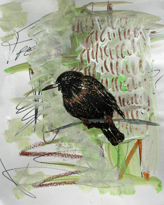 Starling. Mixed-media on paper.