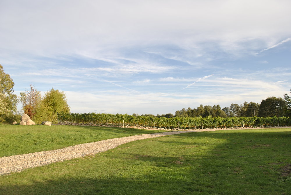 Vineyard -