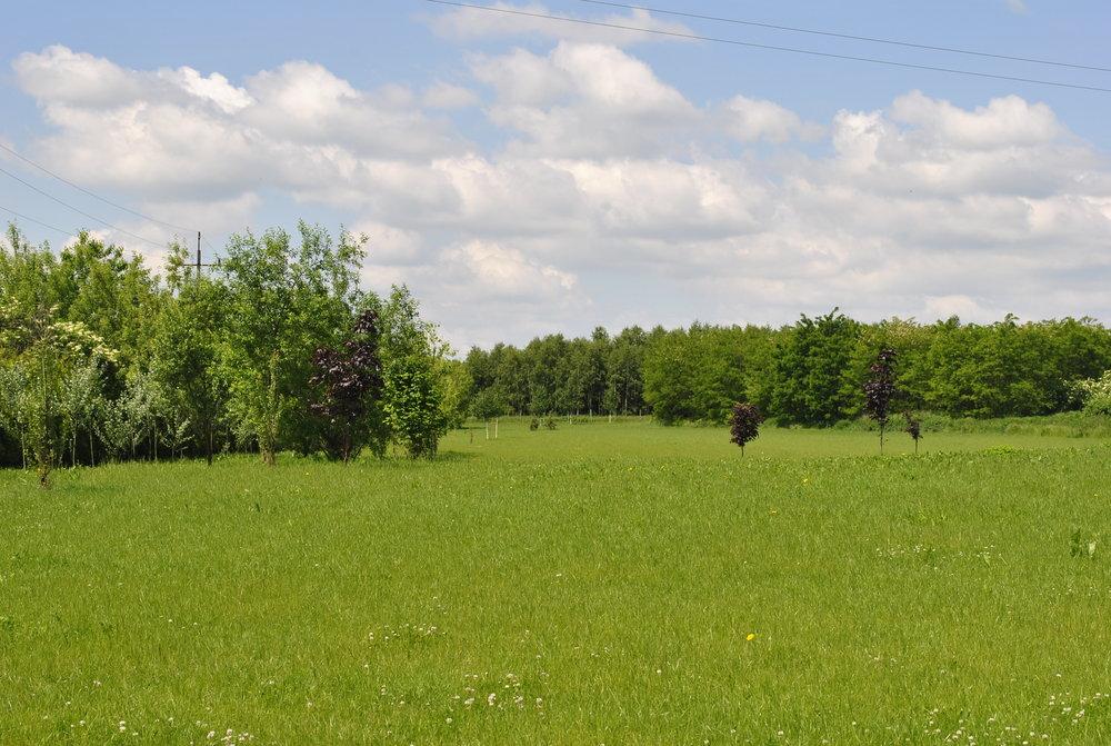 1910 - Projekt Wielkiego Parku według Stefana Ciechlowskiego symbolizuje okres renesansu Dworu Wilkowice i jego okolic