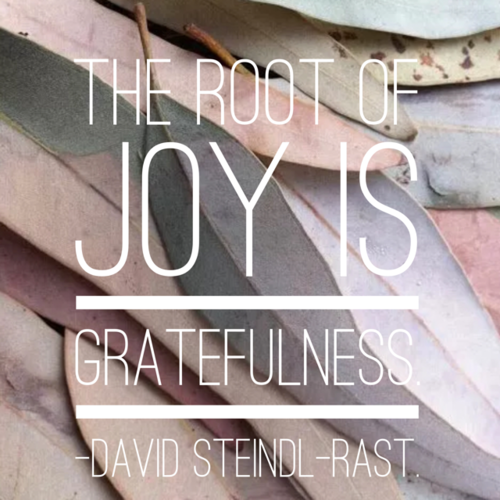 """A photo of multi-colored leaves overlapping with the words, """"The root of joy is gratefullness. - David Steindl - Rast."""""""
