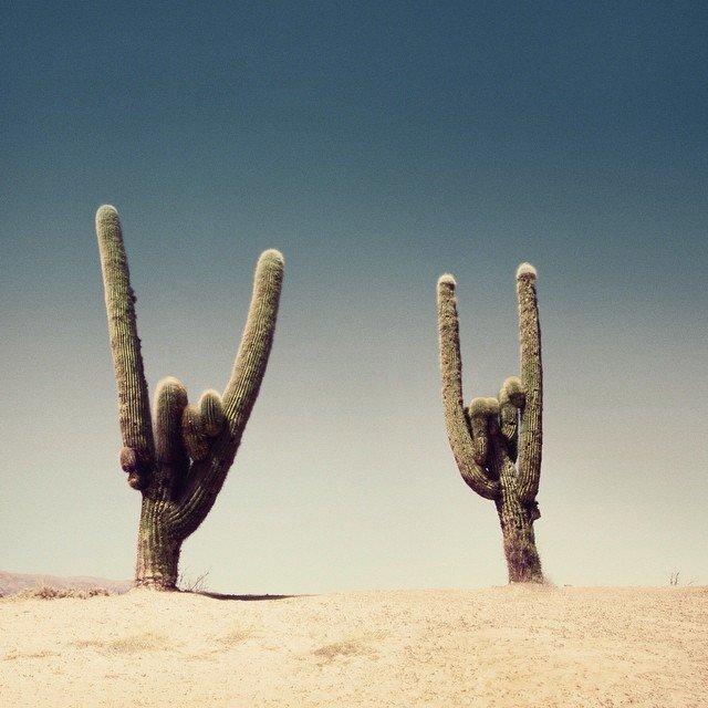 rocknrollcacti (1).jpg