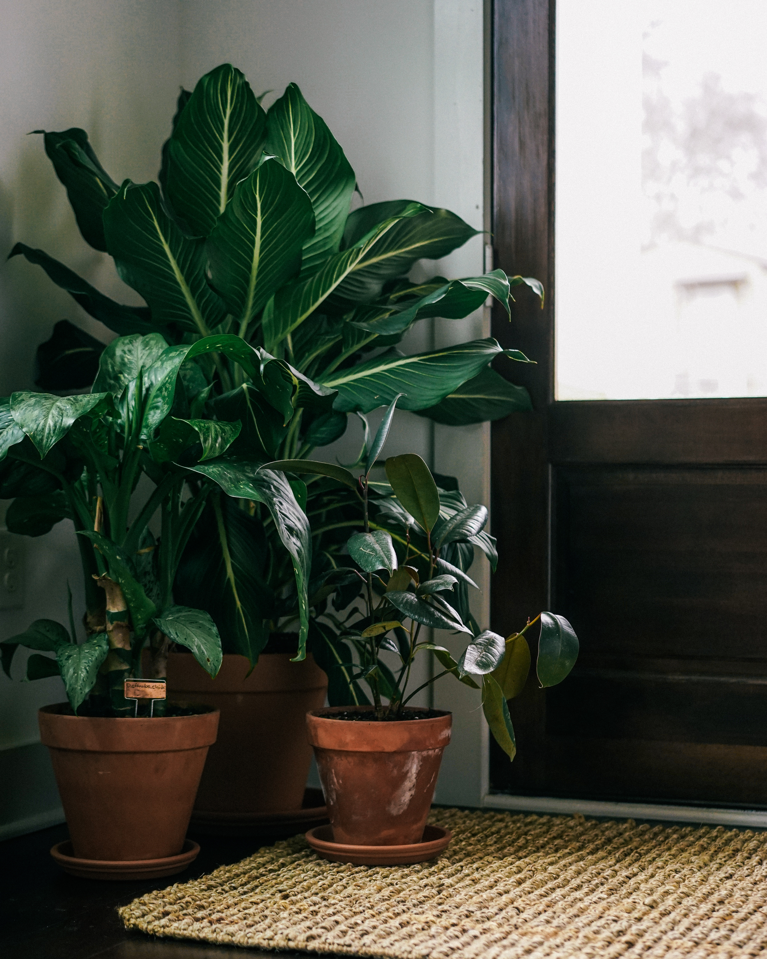 Organizing with House Plants and UncommonGoods